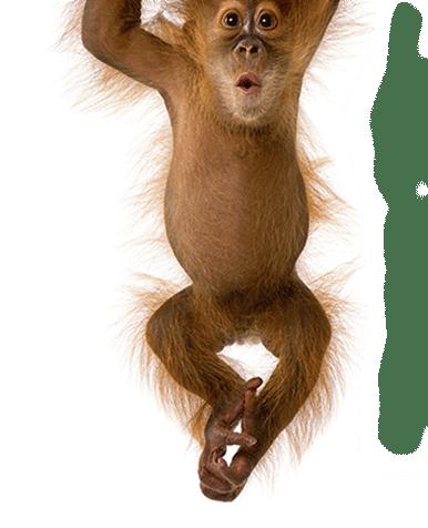 webbureau københavn, abe der hænger